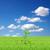 verde · isolado · azul · grama · folha - foto stock © bloodua