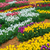 campo · de · flores · flor · primavera · paisaje · fondo - foto stock © bloodua
