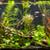 пресноводный · аквариум · зеленый · красивой · тропические - Сток-фото © bloodua