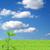 suciedad · verde · planta · aislado - foto stock © bloodua