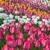 цветок · весны · пейзаж · фон - Сток-фото © bloodua
