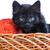 черный · котенка · корзины · пряжи · Cute · ребенка - Сток-фото © bloodua