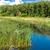 болото · реке · южный · Иллинойс - Сток-фото © bloodua