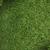 Natale · verde · isolato · impianto · bianco - foto d'archivio © bloodua