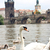 prague charles bridge in prague czech republic stock photo © bloodua