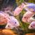 édesvíz · akvárium · halfajok · zöld · gyönyörű · trópusi - stock fotó © bloodua