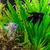 słodkowodnych · akwarium · ryb · zielone · piękna · tropikalnych - zdjęcia stock © bloodua