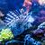 close up view of a venomous red lionfish stock photo © bloodua