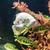 água · doce · aquário · verde · belo · tropical - foto stock © bloodua