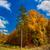 autumn forest panorama stock photo © bloodua