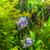 piranha · halfajok · akvárium · trópusi · édesvíz · hal - stock fotó © bloodua