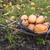 calabazas · calabaza · espera · vendido · preferido - foto stock © bloodua