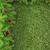 natal · quadro · neve · isolado · branco · verde - foto stock © bloodua