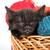 bebek · oynama · kedi · oyuncak · göbek · mutlu - stok fotoğraf © bloodua