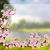 távolkeleti · stílus · festmény · cseresznyevirág · tavasz · virágok - stock fotó © blotty