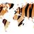 world map in animal print design tiger pattern vector illustra stock photo © bluelela