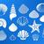 conjunto · mar · conchas · vetor · natureza - foto stock © blumer1979