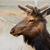 young caribou head left stock photo © bobkeenan