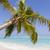 tropikal · büyüyen · yeşil · çim · başvurmak - stok fotoğraf © boggy