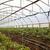 domates · hasat · yaz · sebze · bahçe · bahçıvan - stok fotoğraf © boggy