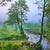 arbre · matin · étang · soleil · eau · printemps - photo stock © bogumil