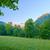 alberi · mattina · montagna · bella · cielo · legno - foto d'archivio © bogumil