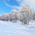 snowy landscape in the narew river valley beautiful winter trail stock photo © bogumil