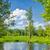 лес · пейзаж · Панорама · мнение · болото · деревья - Сток-фото © bogumil