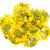 rapeseed flower isolated on white background stock photo © bozena_fulawka