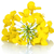 rapeseed flower stock photo © bozena_fulawka