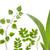 zab · növények · izolált · fehér · felső · kilátás - stock fotó © bozena_fulawka