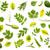 foglie · verdi · isolato · bianco · raccolta · top · view - foto d'archivio © Bozena_Fulawka