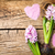jacinto · flores · isolado · branco · verão - foto stock © bozena_fulawka