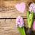 primavera · jacinto · flores · rosa · jardim · folha - foto stock © bozena_fulawka
