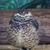 uil · blauwe · hemel · vogel - stockfoto © bradleyvdw
