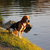 curieux · Beagle · jeunes · chien · tête · sur - photo stock © bradleyvdw