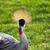 guindaste · retrato · olho · grama · fundo · verde - foto stock © bradleyvdw