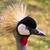 kék · állvány · portré · veszélyeztetett · madár · Dél-Afrika - stock fotó © bradleyvdw