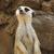 ül · portré · közelkép · sötét · állat · körmök - stock fotó © bradleyvdw