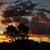 Sudafrica · campagna · foresta · erba · natura · panorama - foto d'archivio © bratovanov