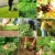 água · fresco · folhas · verdes · quadro · belo - foto stock © brebca