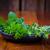 fresco · salsa · de · folhas · branco · folha - foto stock © brebca