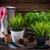 inny · narzędzia · roślin · wiosną · ogród · trawy - zdjęcia stock © brebca