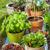 flower pots stock photo © brebca