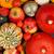 thanksgiving background stock photo © brebca