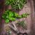ervas · jardim · ferramentas · primavera · comida - foto stock © brebca