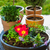 小 · 屋根 · ハーブ · 庭園 · 花 - ストックフォト © brebca