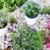 planten · landscaping · openbare · gezondheid · bomen · bladeren - stockfoto © brebca