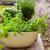 gyógynövények · edény · otthon · tavasz · friss · nő - stock fotó © brebca