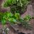 ervas · manjericão · alecrim · mesa · de · madeira · comida · folha - foto stock © brebca